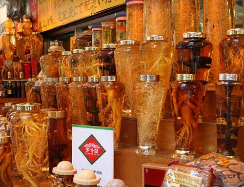 Cách sử dụng và cách ngâm rượu sâm tươi Hàn Quốc